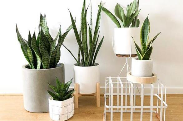 14 of the best plants for your bedroom