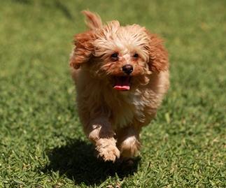 100 cute dog names