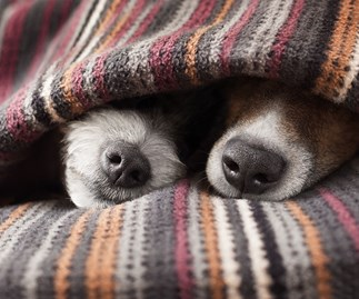 How do you keep your dog warm in the winter?