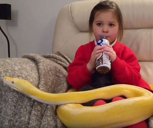 WATCH: Brave little girl patting a 3.5-metre python is enough to send shivers down your spine