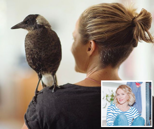 When a magpie joins a family and helps save the mum's life, it's only natural that Hollywood would come knocking