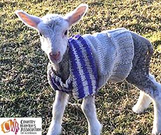 Baby lamb jumper knitting pattern