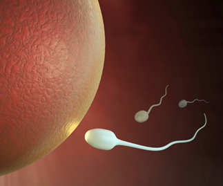 fertility sperm approaching an egg
