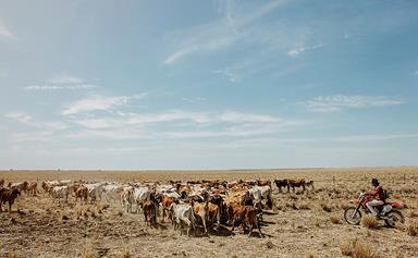 Meet our drought heroes