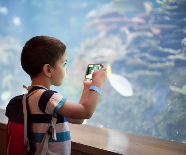 Small boy takes photo at aquarium in school holidays
