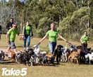 Real life: I walked 40 dogs at once!