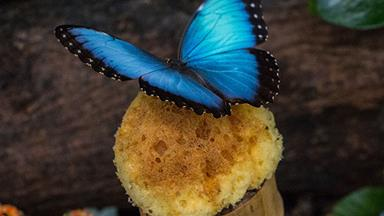 True confession: A butterfly put the spark back in my marriage