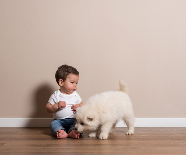 How to introduce children to a new dog