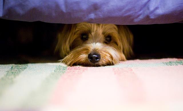 Does my dog have depression? Nine mental health signs to watch in your pets