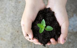 5 easy things you can do to help the planet on World Environment Day