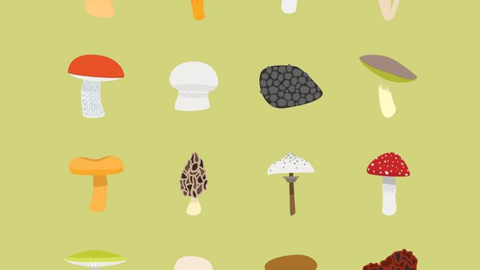 7 fun-gi facts anyone who's obsessed with mushrooms needs to know