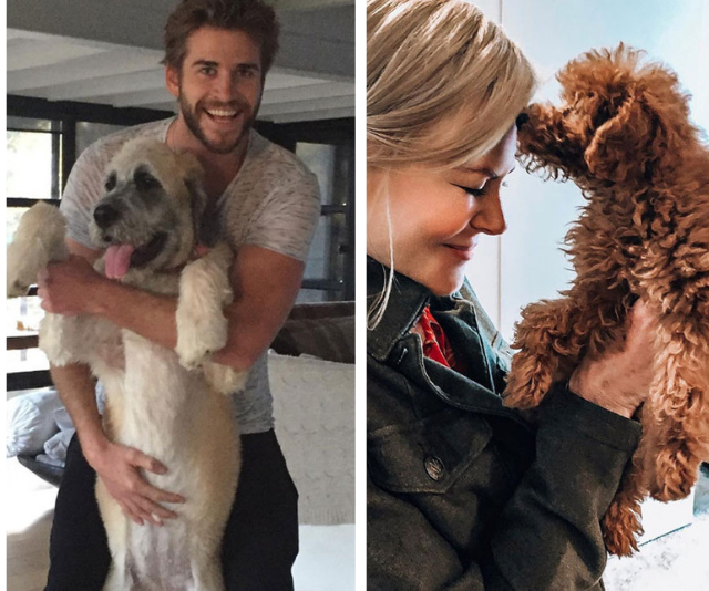 The most adorable photos ever of celebrities and their pets