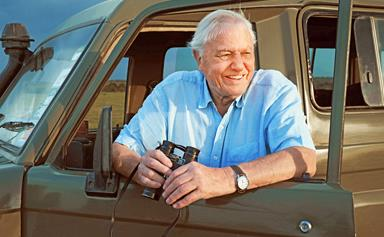 Sir David Attenborough explains why the wonders of the natural world are more in focus than ever before