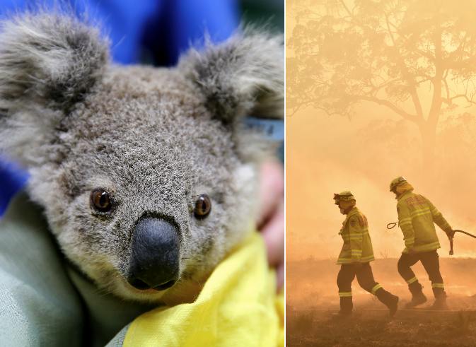 Here's all the brands donating profits to the Aussie bushfire relief efforts