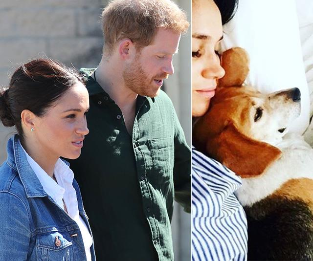 Meghan Markle and Prince Harry have moved their dogs to Canada - all but confirming they're leaving the UK