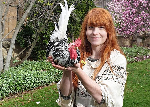 Real life: My pet rooster Teapot has been blessed by a priest twice!
