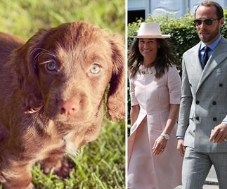 """""""I cannot wait to share many adventures with her"""": Meet James Middleton's super cute new Cocker Spaniel pup, Nala"""