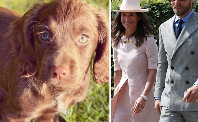 """I cannot wait to share many adventures with her"": Meet James Middleton's super cute new Cocker Spaniel pup, Nala"