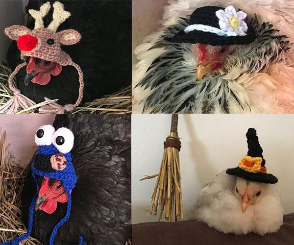 Hooked on chooks: You HAVE to see these clucking gorgeous knitted chicken outfits!