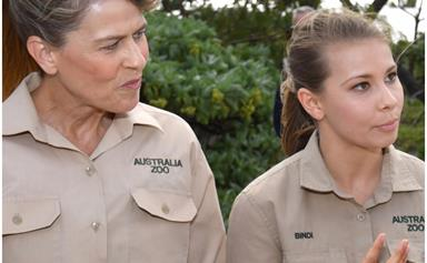 Pregnant Bindi Irwin and Chandler Powell are making room for their baby, leaving Terri's housing situation in question