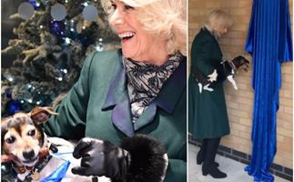 Duchess Camilla opens the Duchess of Cornwall Kennels in a very non-traditional way