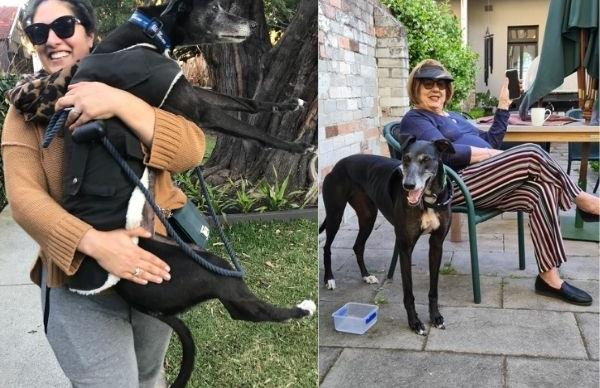 REAL LIFE: These rescue greyhounds needed help - but what they gave their new owners was an even greater gift