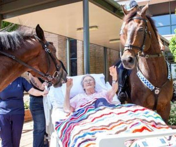 REAL LIFE: These two horses made one dying mother's final wish come true