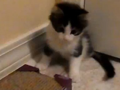 Two-legged kitten is a heart- warming inspiration
