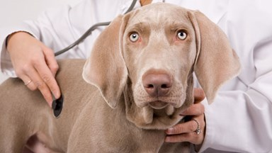 How to keep your puppy's health in check