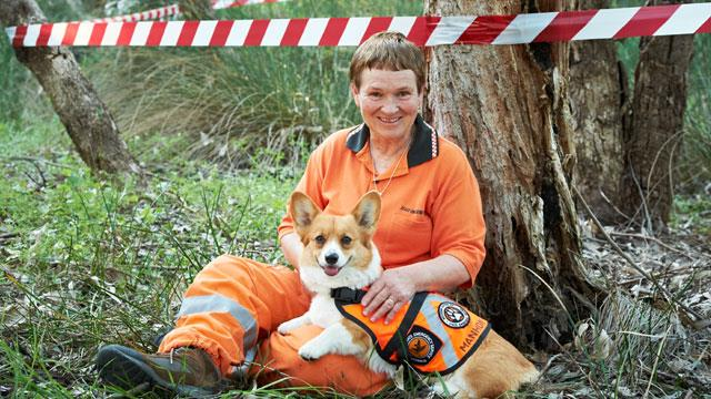 Hero SES tracking dog sniffs out trouble