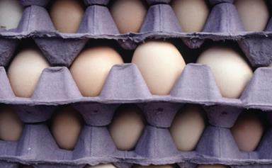 The crack on eggs