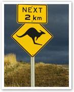 Kangaroo: The weight-loss meat