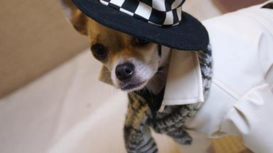 Is this the best dressed dog in the world?