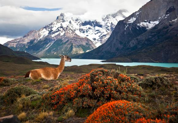 Located at the southern end of South America, Patagonia boasts some of the most dramatic landscapes on earth. Between the soaring mountain peaks and deep crater lakes is a bustling symphony of exotic plants and wildlife and a natural beauty punctuated only by peaceful silence. It's not easy to get to (that's just the point) but this haven of tranquility at the end of the earth provides just the right backdrop for stressed out individuals looking to disconnect from the world and rediscover a sense of perspective. *Image: Getty*