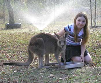 I'm a wildlife carer with my grandparents so we get lots of cuddley animals, but then we can get some animals that are not happy. Buddy is an eastern grey kangaroo and he is very cheeky. Please look after our little furry creatures that hide in the wild.  — Hayley
