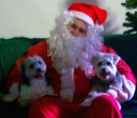 I took my 2 maltese x silkie dogs Buffy and Gus to have their photo's with santa at R.S.P.C.A. store - Springwood, Brisbane.  — Phyllis
