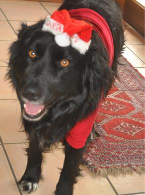 My dog Bobby is my favourite pet i've ever had, he loves to play soccer and is a great companion for the family. He is just as excited for Christmas as we are - as you can see in the photo!  — Fatima