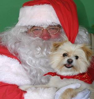 George, our 3-year-old dog, with father Xmas.  — Louise