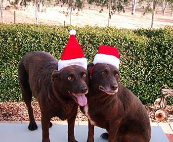 Here is Bob and Tippy ready for the Christmas Party.  — Kerry