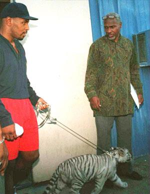 Controversial boxer Mike Tyson, infamous for biting off an opponent's ear in a bout, likes to delve into the dangerous. He has previously owned a pet tiger, ironically named Kitty.
