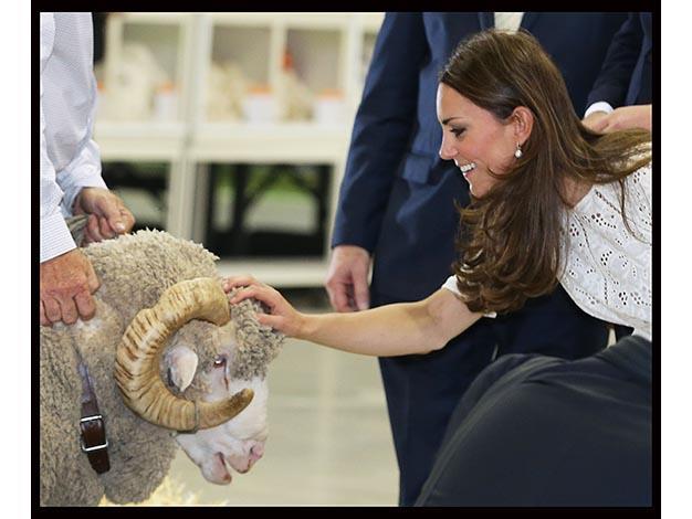 Kate pats an iconic Australian merino sheep. Photo: Media Mode