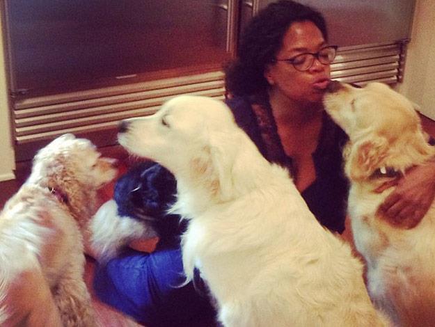 Oprah Winfrey loves spending time white-haired golden retrievers.