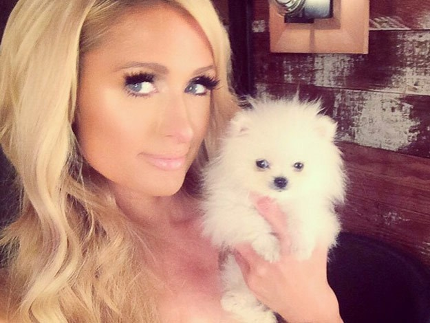 Paris Hilton's new pooch is simply adorable! At just two and a half inches long, he is one of the world's smallest Pomeranians and cost her $13,000.