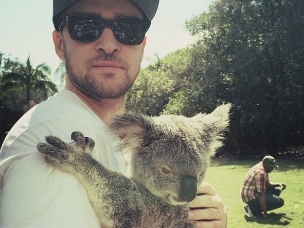 Last week, singing sensation Justin Timberlake took some time out from his busy Aussie tour to cuddle a koala.