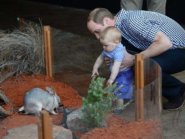 George got to meet a bilby named after him.