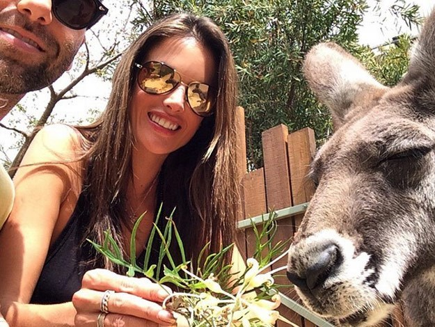 Brazilian beauty and Victoria's Secret model Alessandra Ambrosio was the latest celebrity to visit Taronga Zoo - feeding a kangaroo while she was in Sydney this week. [READ MORE HERE](http://www.womansday.com.au/celebrity/photo-galleries/2014/10/victorias-secret-angel-alessandra-ambrosio-visits-taronga-zoo/)