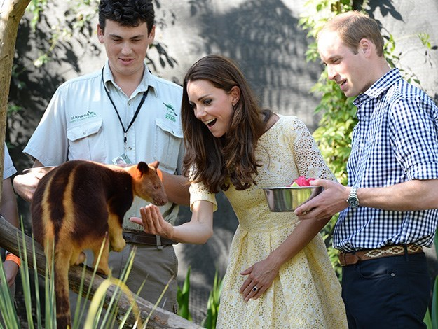 Duchess Catherine gets up close and personal with a red panda at Taronga Zoo.