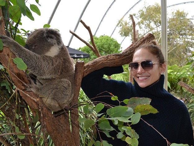 Even Jennifer Lopez has come over all warm and fuzzy when she met a koala.