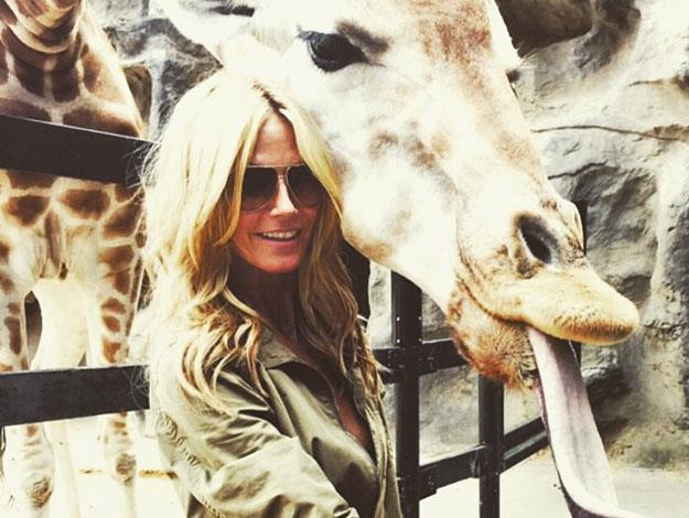 Heidi got up close and personal with a Giraffe at Taronga Zoo.