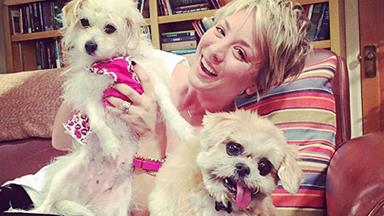 Hollywood's most pampered pets